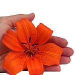Hand mit Blume